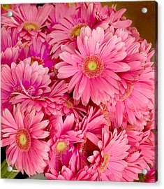 Pink Gerbera Daisies Acrylic Print by Art Block Collections