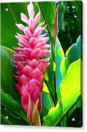 Pink Ginger Acrylic Print by Karon Melillo DeVega