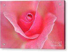 Pink Glow Acrylic Print by Kaye Menner