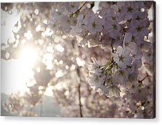 Pink Gold Acrylic Print by Michael Donahue