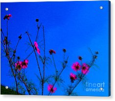 Pink Green And Blue Acrylic Print by Tina M Wenger