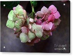 Pink Green And Rain Acrylic Print