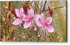 Acrylic Print featuring the photograph Pink Guara by Bonnie Muir