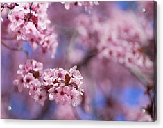 Pink Acrylic Print by Guido Montanes Castillo