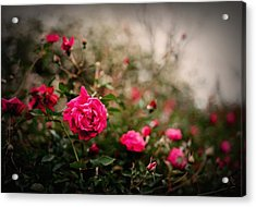 Pink Heaven Acrylic Print by Linda Unger