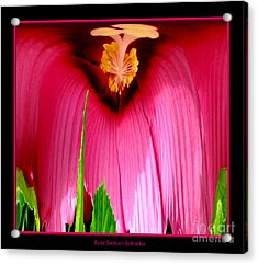 Pink Hibiscus Abstract Acrylic Print by Rose Santuci-Sofranko