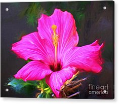Pink Hibiscus Digital Painting In Oil Acrylic Print