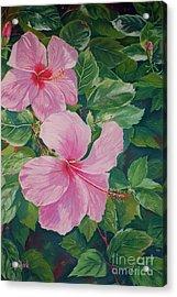 Pink Hibiscus Acrylic Print by John Clark