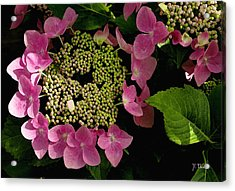 Acrylic Print featuring the photograph Pink Hydrangea by James C Thomas