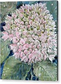 Pink Hydrangea Acrylic Print