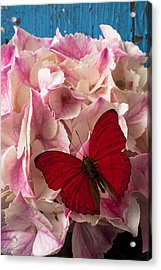 Pink Hydrangea With Red Butterfly Acrylic Print by Garry Gay
