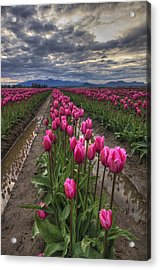 Pink Impression Acrylic Print by Mark Kiver