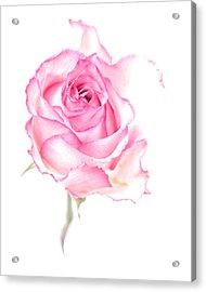 Pink Impression Acrylic Print