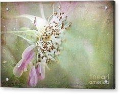 Pink Impression Acrylic Print by Teresa Zieba