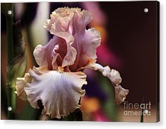 Pink Iris Flower Acrylic Print