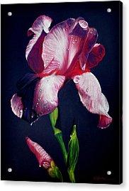 Pink Iris Acrylic Print by Wade Starr