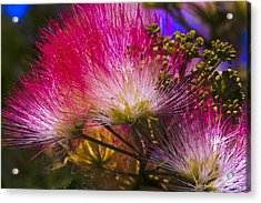 Acrylic Print featuring the photograph Pink  by Ivete Basso Photography