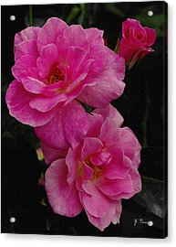 Acrylic Print featuring the photograph Pink Knock Outs by James C Thomas