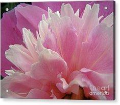 Pink Acrylic Print by Kristine Nora