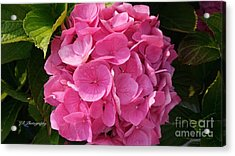 Acrylic Print featuring the photograph Blushing Rose by Jeannie Rhode
