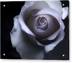 Black And White Rose Flower Macro Photography Acrylic Print