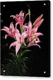 Pink Lilies At Night Acrylic Print by Elisabeth Ann