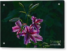 Pink Lilies In The Rain 2 Acrylic Print by Sharon Talson