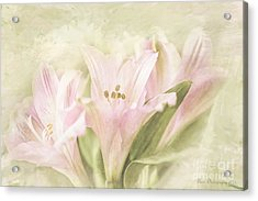 Acrylic Print featuring the painting Pink Lilies by Linda Blair