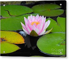 Pink Lilly Flower Acrylic Print