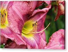 Pink Lily Acrylic Print by Rosemary Aubut