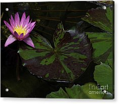 Pink Lotus Flower On Heart Shape Lily Pad Acrylic Print