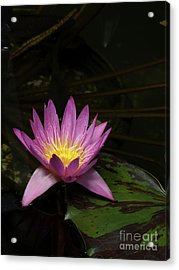 Pink Lotus Flower On Lily Pad Acrylic Print