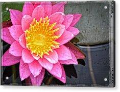Pink Lotus Flower - Zen Art By Sharon Cummings Acrylic Print by Sharon Cummings