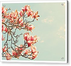 Pink Magnolia Flowers Against Blue Sky Acrylic Print by Brooke T Ryan