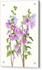 Pink Mallow Flowers Acrylic Print by Sharon Freeman