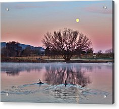 Acrylic Print featuring the photograph Pink Morning by Lynn Hopwood