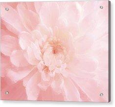 Pink Mum Luminous Painted Blossom Acrylic Print by Patricia E Sundik