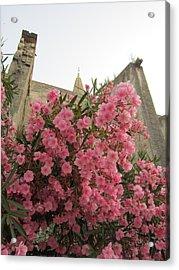Pink Oleander Acrylic Print by Pema Hou