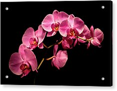 Pink Orchids 3 Acrylic Print by  Onyonet  Photo Studios