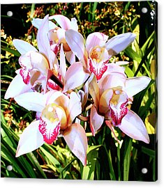 Pink Spirit Orchids Palm Springs Acrylic Print by William Dey