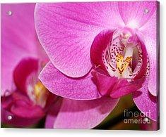 Pink Orchids Acrylic Print by Sabrina L Ryan