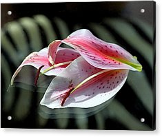 Pink Oriental Lily Reassembled 2 Acrylic Print