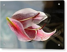 Pink Oriental Lily Reassembled Acrylic Print
