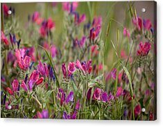 Acrylic Print featuring the photograph Pink Outburst by Uri Baruch