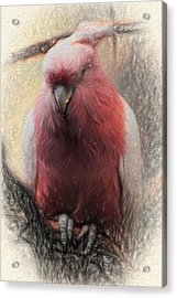 Pink Painted Parrot Acrylic Print by Terry Cork