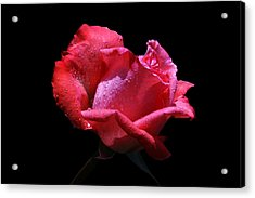Acrylic Print featuring the photograph Pink Panther by Doug Norkum