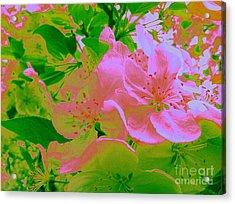 Pink Passion Crabapple Acrylic Print by Shelia Kempf