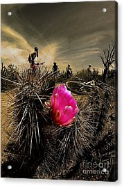 Pink Passion Acrylic Print by Scott Allison