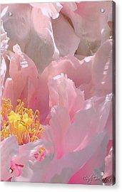 Pink Peonies 2  Acrylic Print