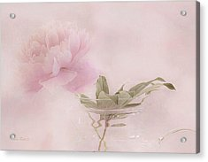 Pink Peony Blossom In Clear Glass Tea Pot Acrylic Print